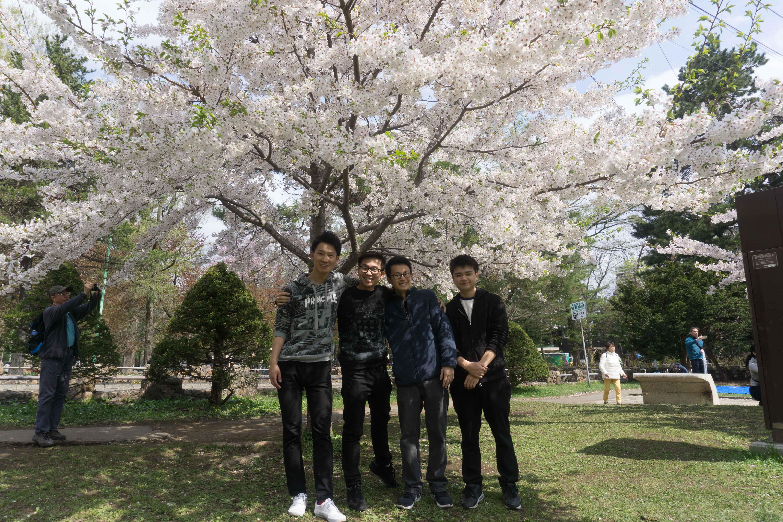 Sakura Season in Hokkaido - Bao Luu - Spring Exchange Sem of AY 2018-2019